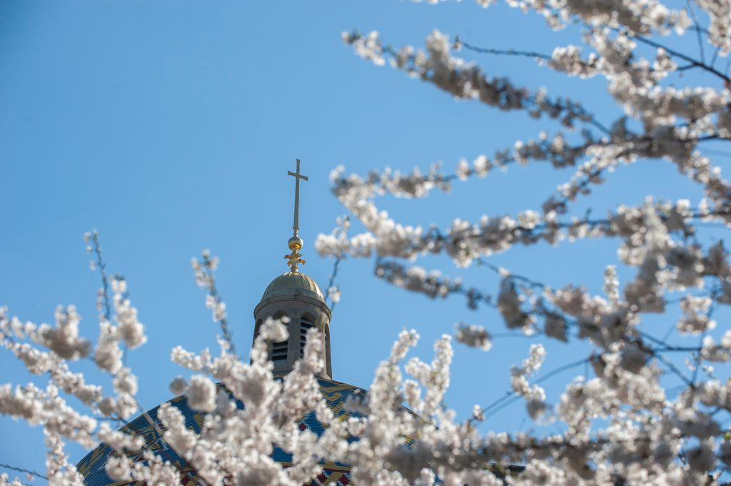 Basilica dome with spring blossoms