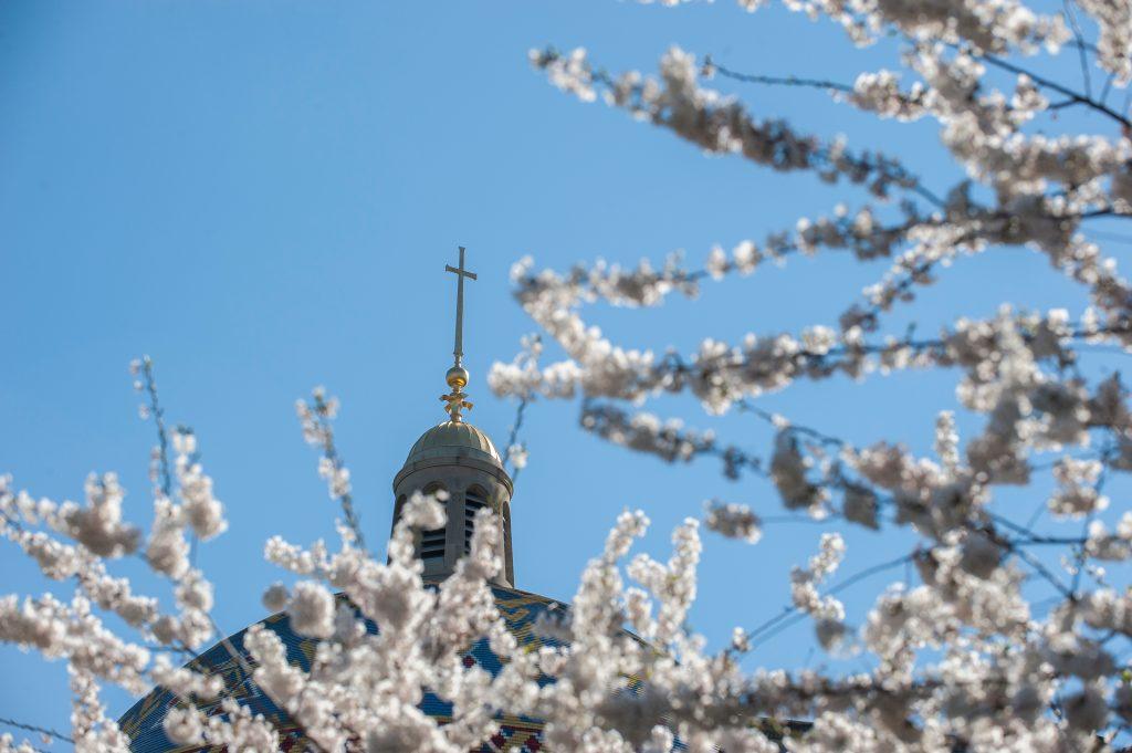 Basilica dome with spring blossoms