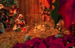 christmas nativity mary jesus poinsettias
